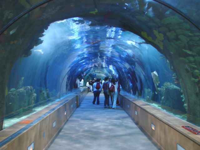 City of Arts and Sciences Aquarium Tunnel