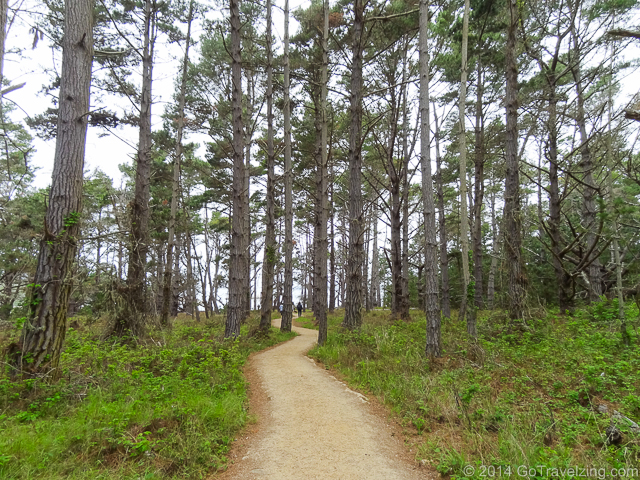 A hiking trail at Point Lobos State Park